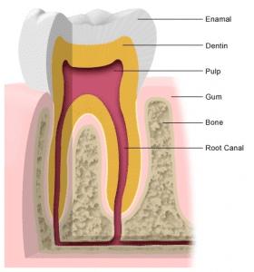 Lynbrook Dental